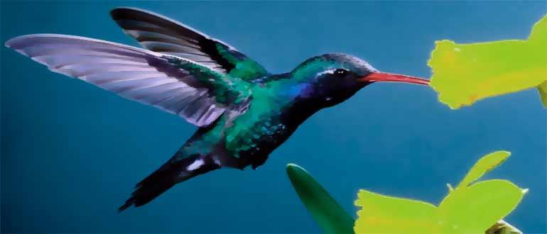 KolibriOS установка