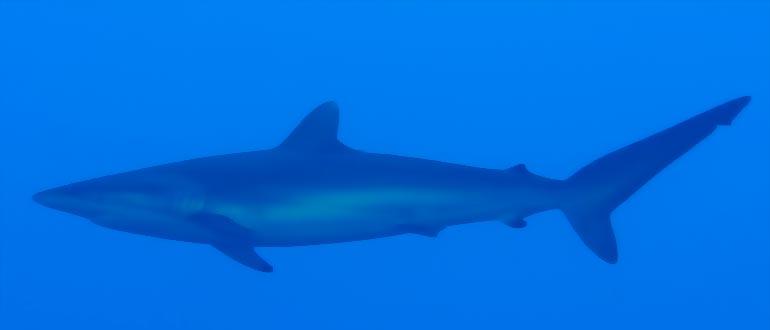 sharklinux установка